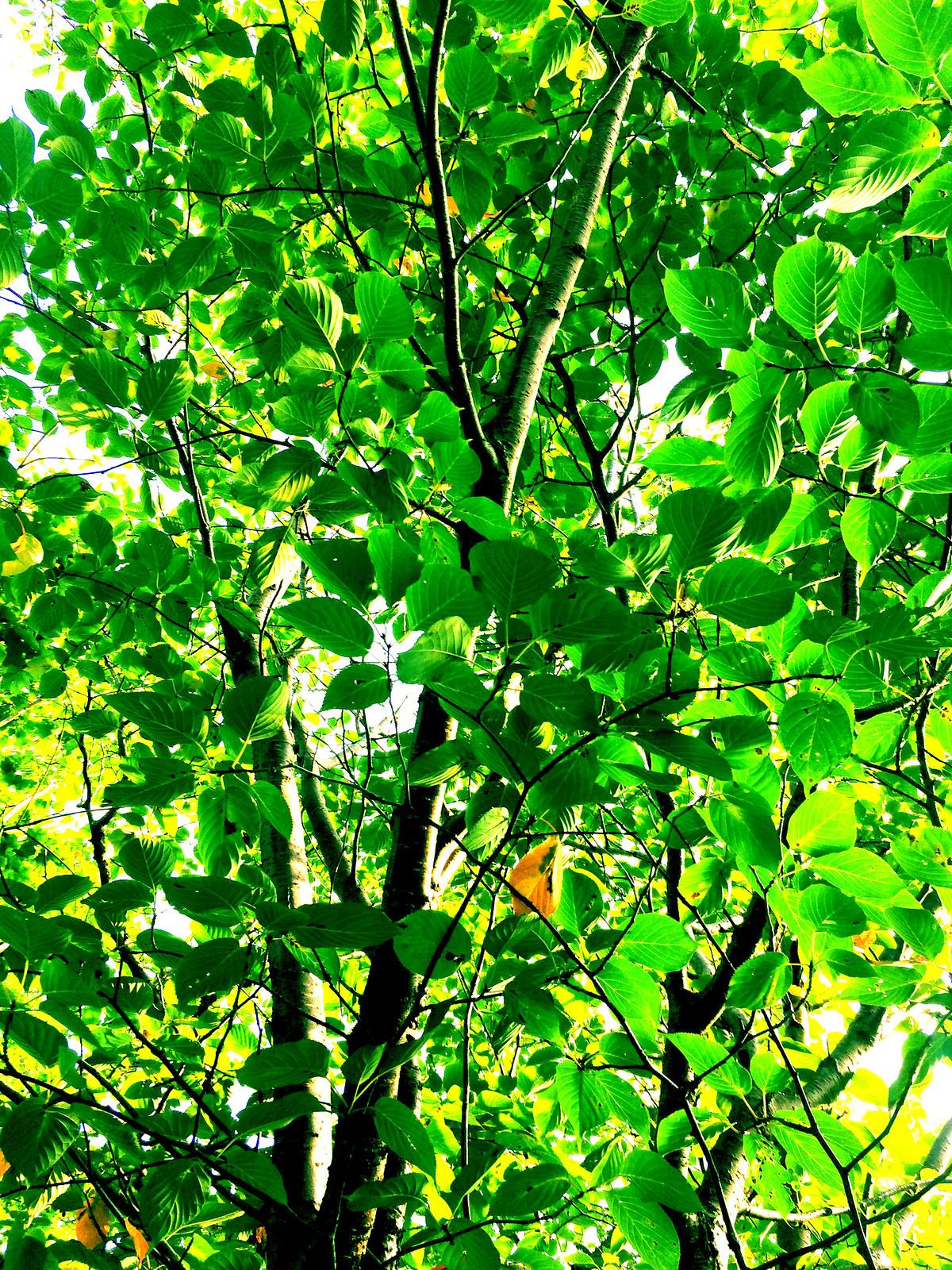 Green Ha 2