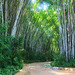 Bamboo alley in safari park