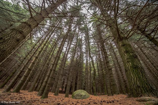 La pietra nel bosco