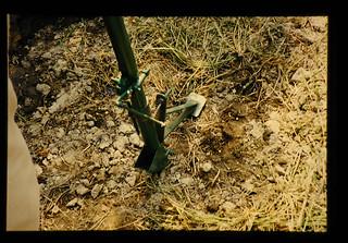 Manual Soybean Seeder(jabber) = 人力式大豆は種機