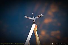 2014-10-15_IMG_6551_ Pinellas Park,Fl_JPG
