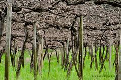 FLORES DA CUNHA/RS/BR - REGIAO © N A D I A J U N G PH