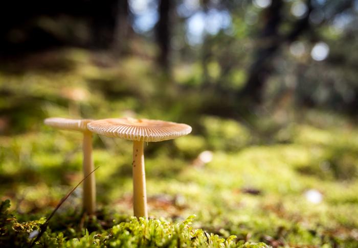 syksy syyskuu helttasieni sieni (1 of 1)