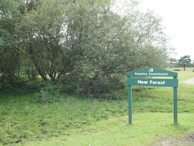 NCN2 Trip - New Forest