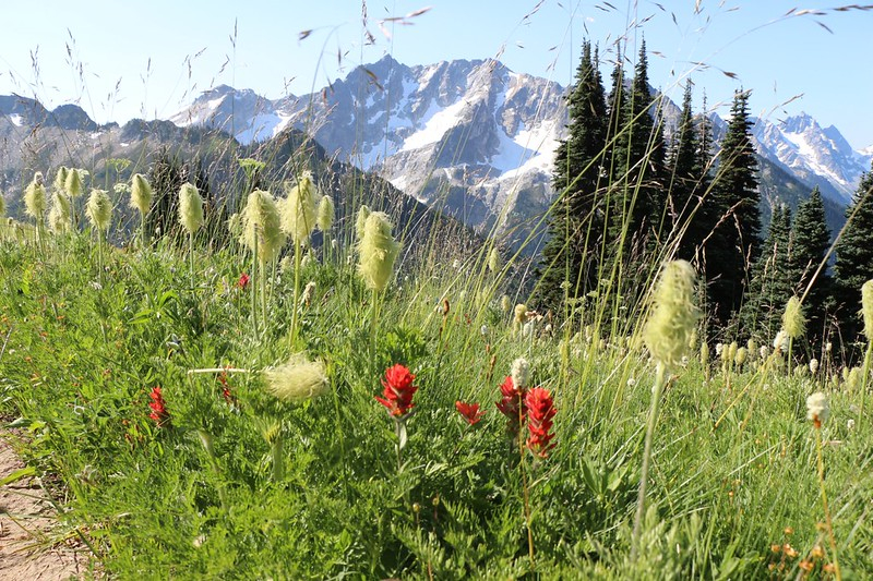 Western Anemone and Indian Paintbrush on the High Pass Trail, Cirque Mountain (peak 7980) in background