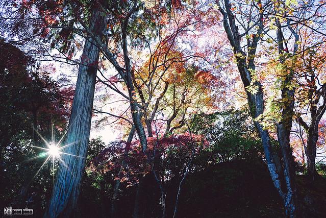 十年,京都四季 | 卷三 | 古都日常 | 05