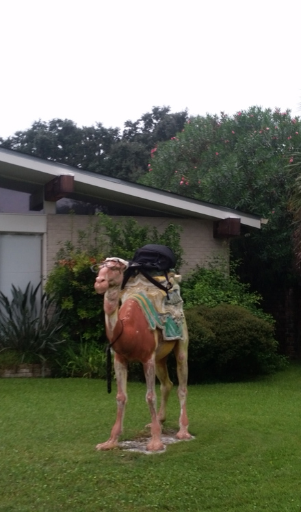 Front Yard Camel