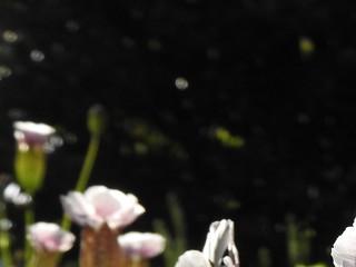かわいい妖精たち 06