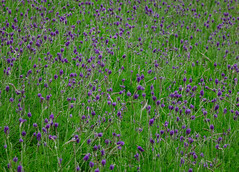 Purple flowers blooming at the botanic garden