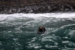 Dolphin Survey Trip Aug 2017