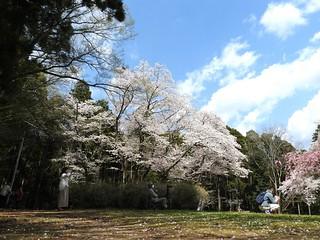 泉自然公園 32 人気者