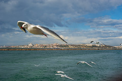 2013-Turquia-Istambul-0124.jpg
