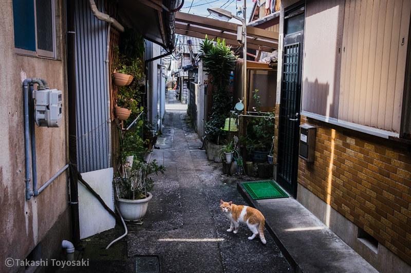 Tokushima Cat Color #267
