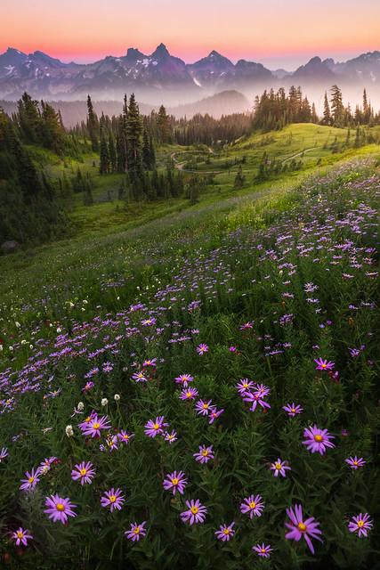 Aster Twilight Heaven On, Nikon D810, AF-S Zoom-Nikkor 14-24mm f/2.8G ED