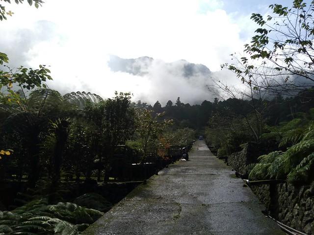 溪頭的山嵐 (11)