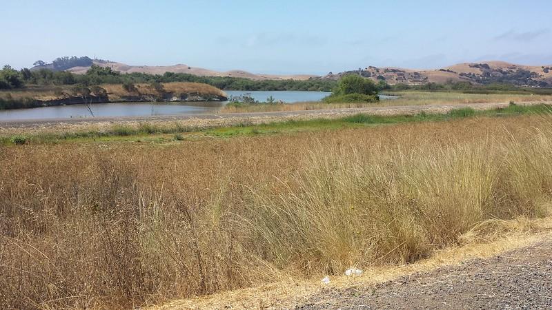 Marsh view, Coyote Hills Park