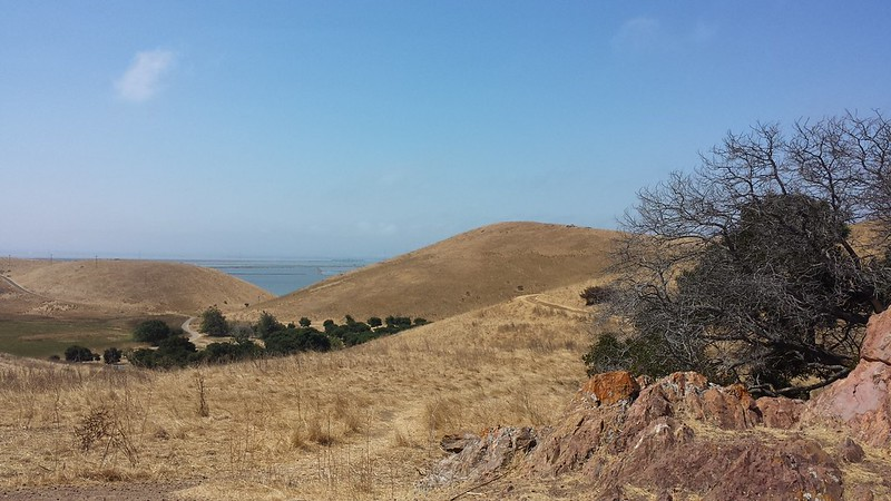 Hilltop view of the salt flats from Coyote Hills Park
