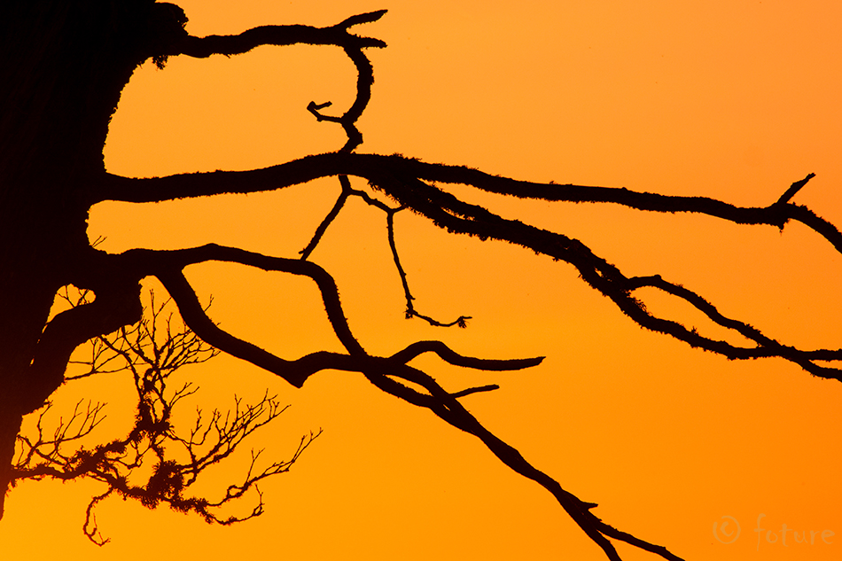 Sunset, art, Estonia, golden, Kaido Rummel