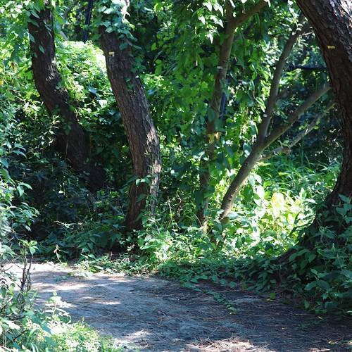 茅ヶ崎海岸 しおさいの森へ。