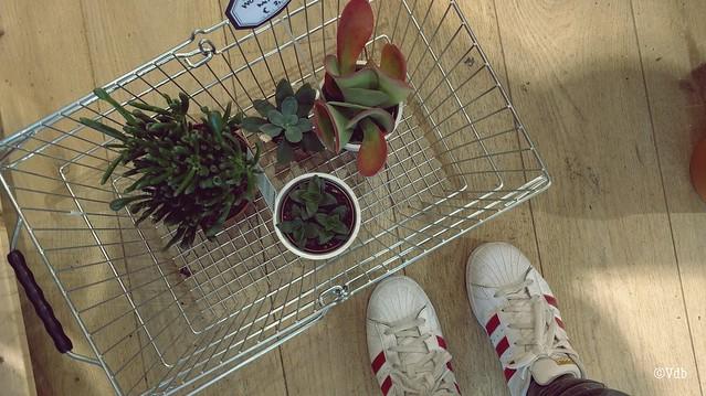 kamerplantjes kopen bij Dille & Kamille