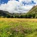Langdale Meadow by diesmali