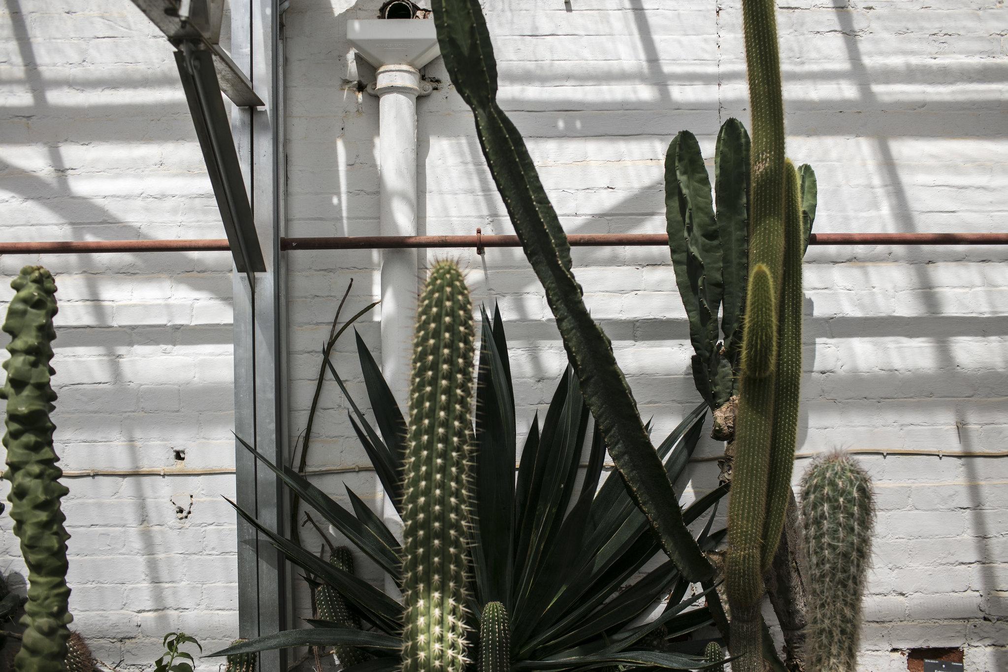 Jordan_Bunker_botanical_gardens_5