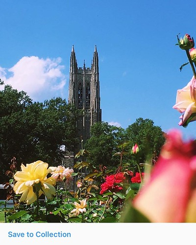 After yesterday's rain, we're back to our regularly scheduled programming of @dukechapel, sunshine, and roses.