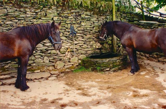 Peaceful Horses - Lake District 1995