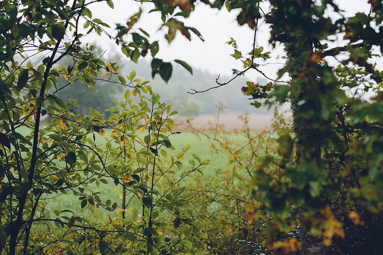 Autumn | Cashew Kitchen0234