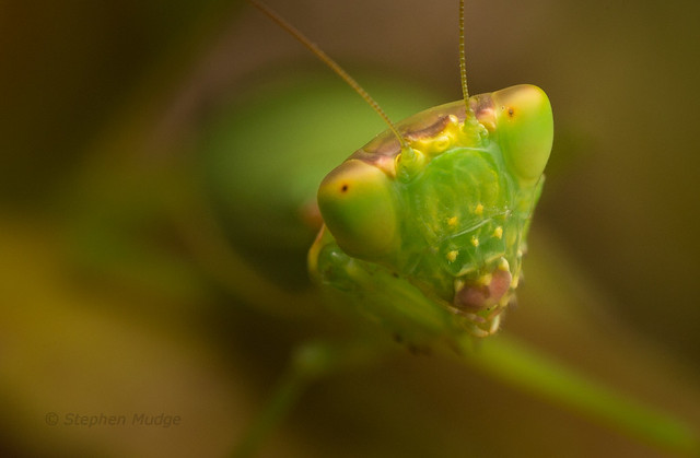 Face to face with a mantid