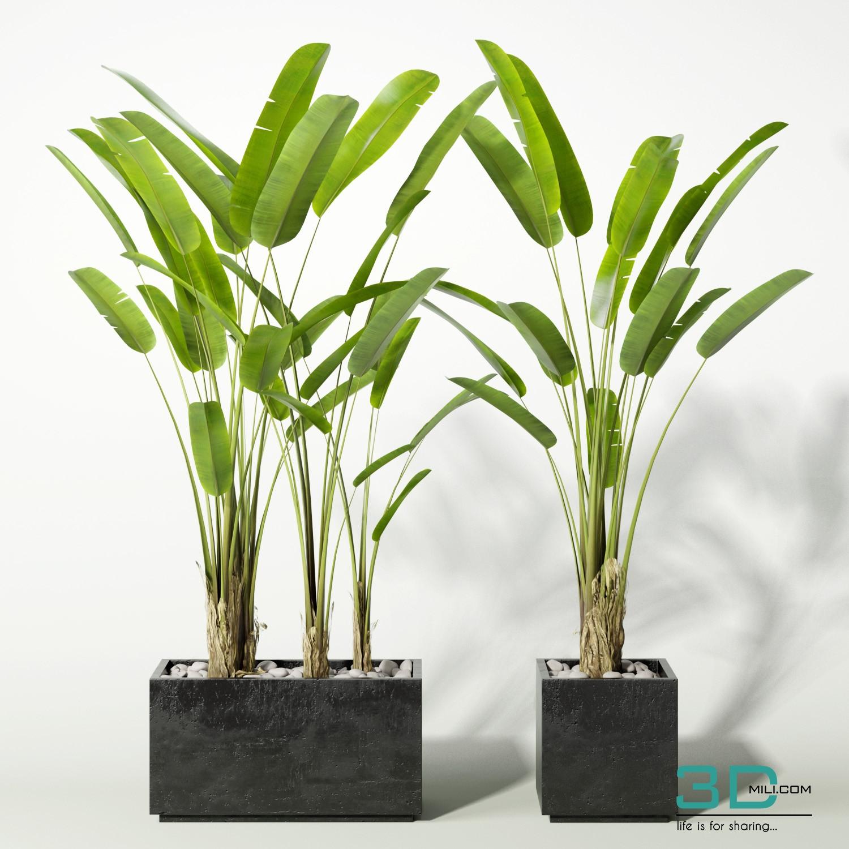 14 3D model banana plants - 3D Mili - Download 3D Model - Free 3D