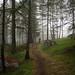 Easy Hiker® by Toni_V