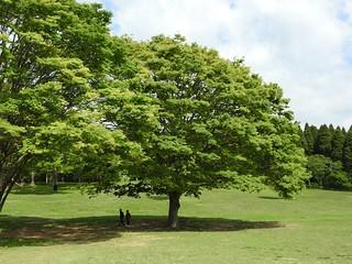 昭和の森 2 木々 06