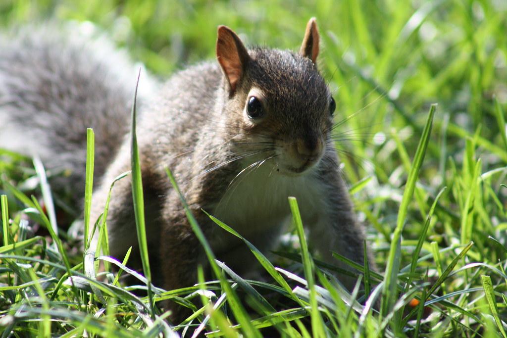 Squirrel Invasion 7
