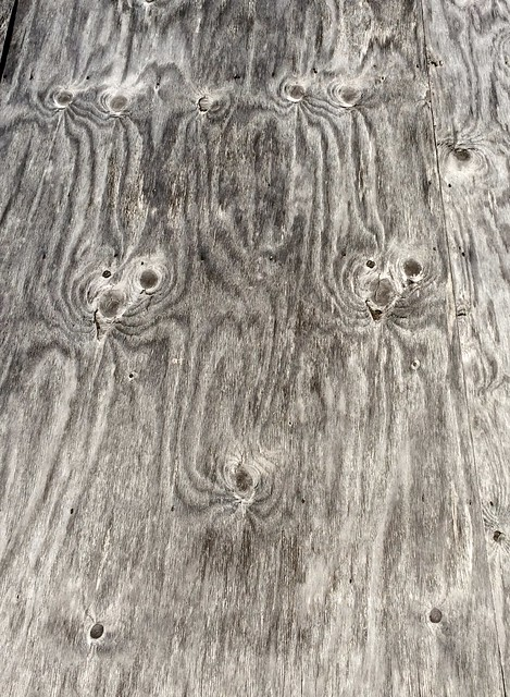 grinning ply creatures