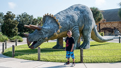 An impressive triceratop at Dinosaur World.
