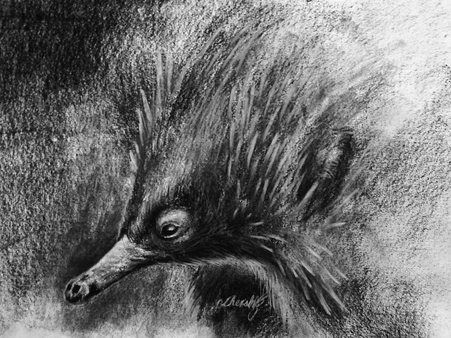 Echidna drawing, Canon POWERSHOT SX420 IS