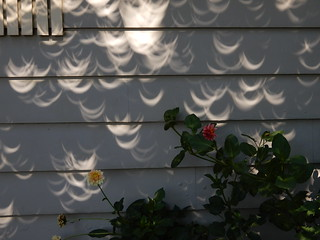 Solar Eclipse Crescents