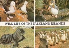 UK - Falkland Islands