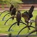 International Birds of Prey Centre (89)