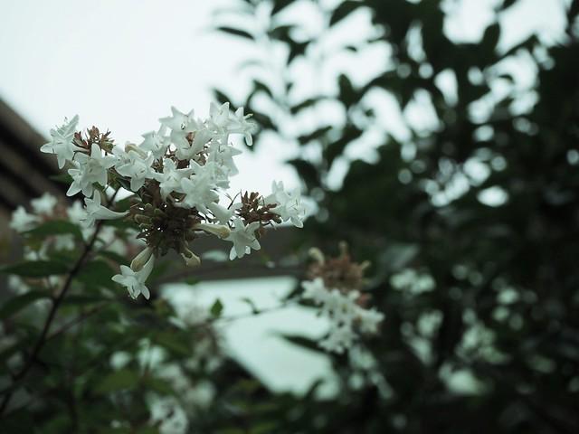 roppongihills_flower_4