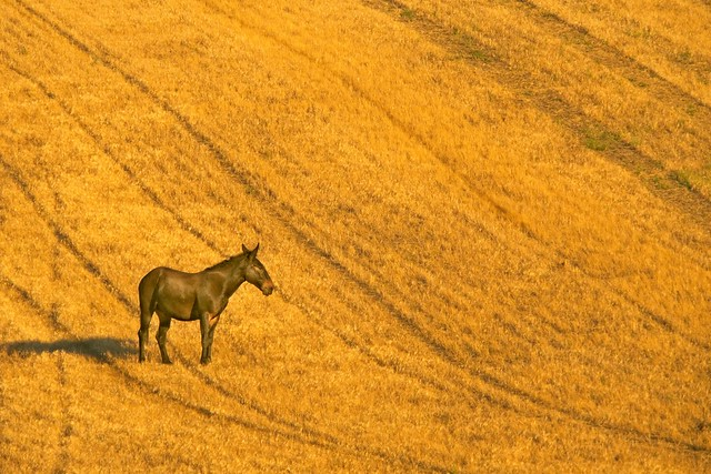 Horse on Harvested Field 159 C