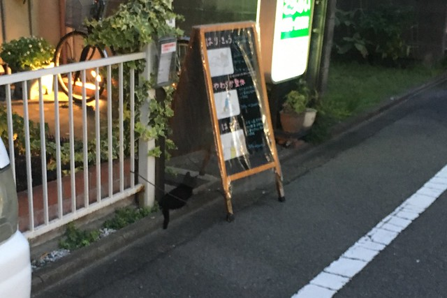 Today's Cat@2017-08-19