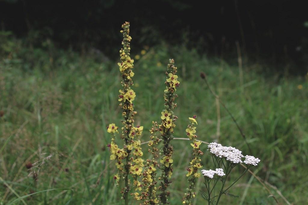 fleursdeschamps