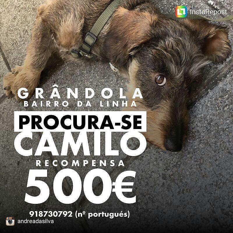Perro perdido en Portugal. #caoperdido #portugal #grandola #perroperdido #camilo #help
