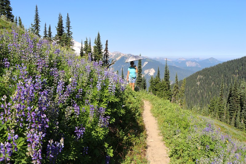 The High Pass Trail switchbacks up Liberty Cap through high sloping flower-filled meadows