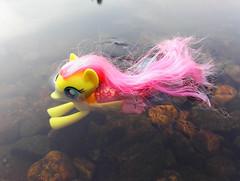 Mermaidshy in Water