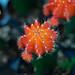 Closeup of Cactus in Chinatown