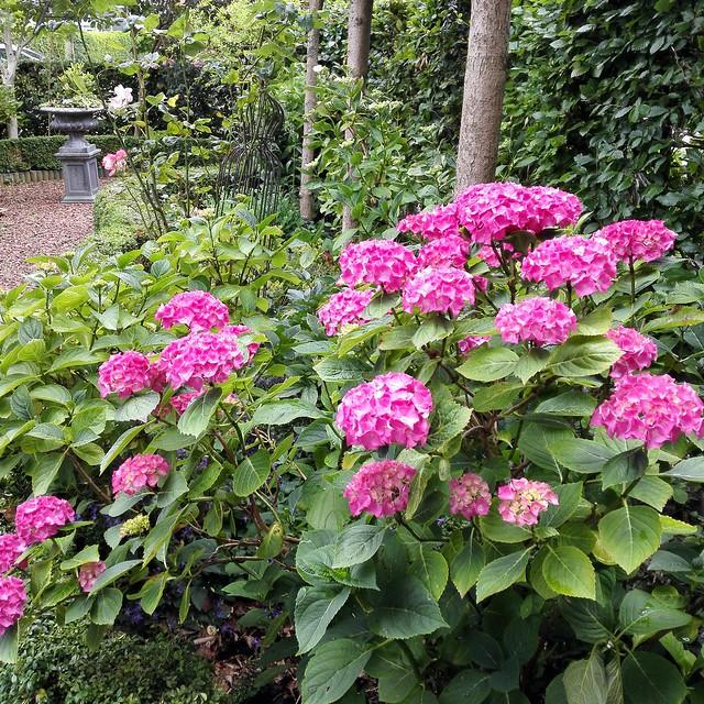 Roze bloemen tuin