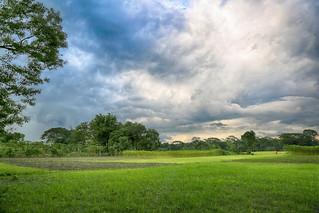Bangladesh Village Landscape
